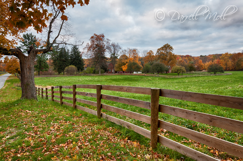 Fence in Fall